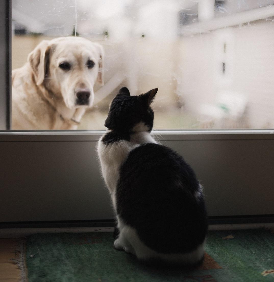 puertas automaticas mascotas perro gato perros gatos dogs cats automatic door house doors pets system